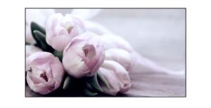 Tulipánová horečka
