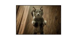 Odraz mrtvé kočky (Dead Cat Bounce)