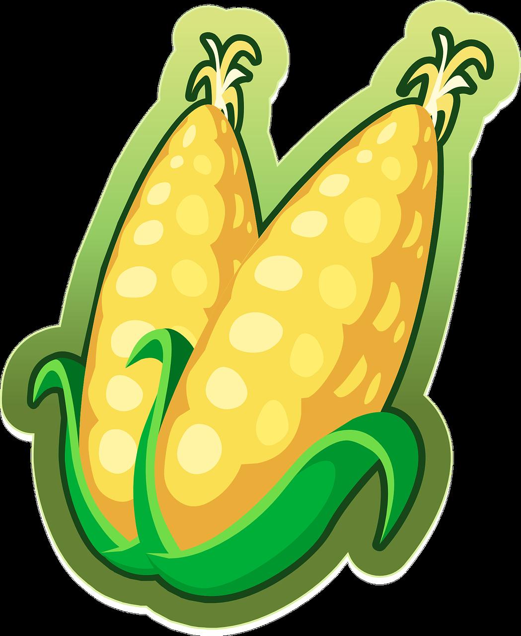 Kukuřice zajímavosti