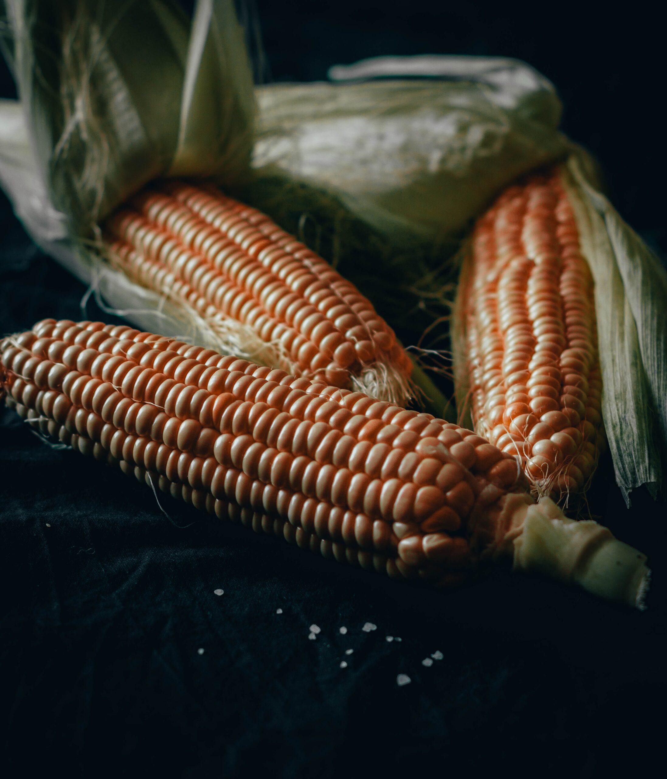 kukuřice obchodování