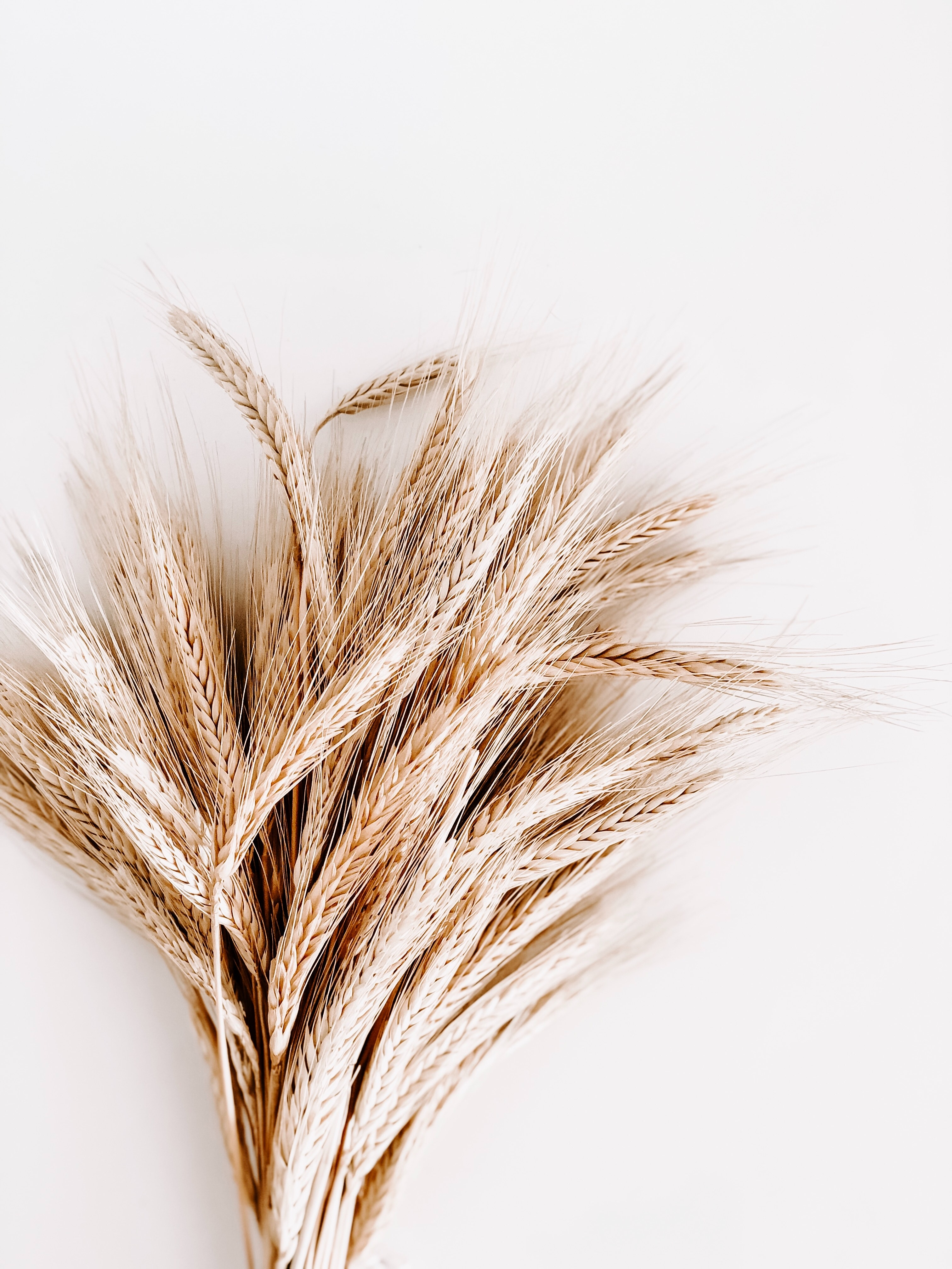 Pšenice zajímavosti na burze