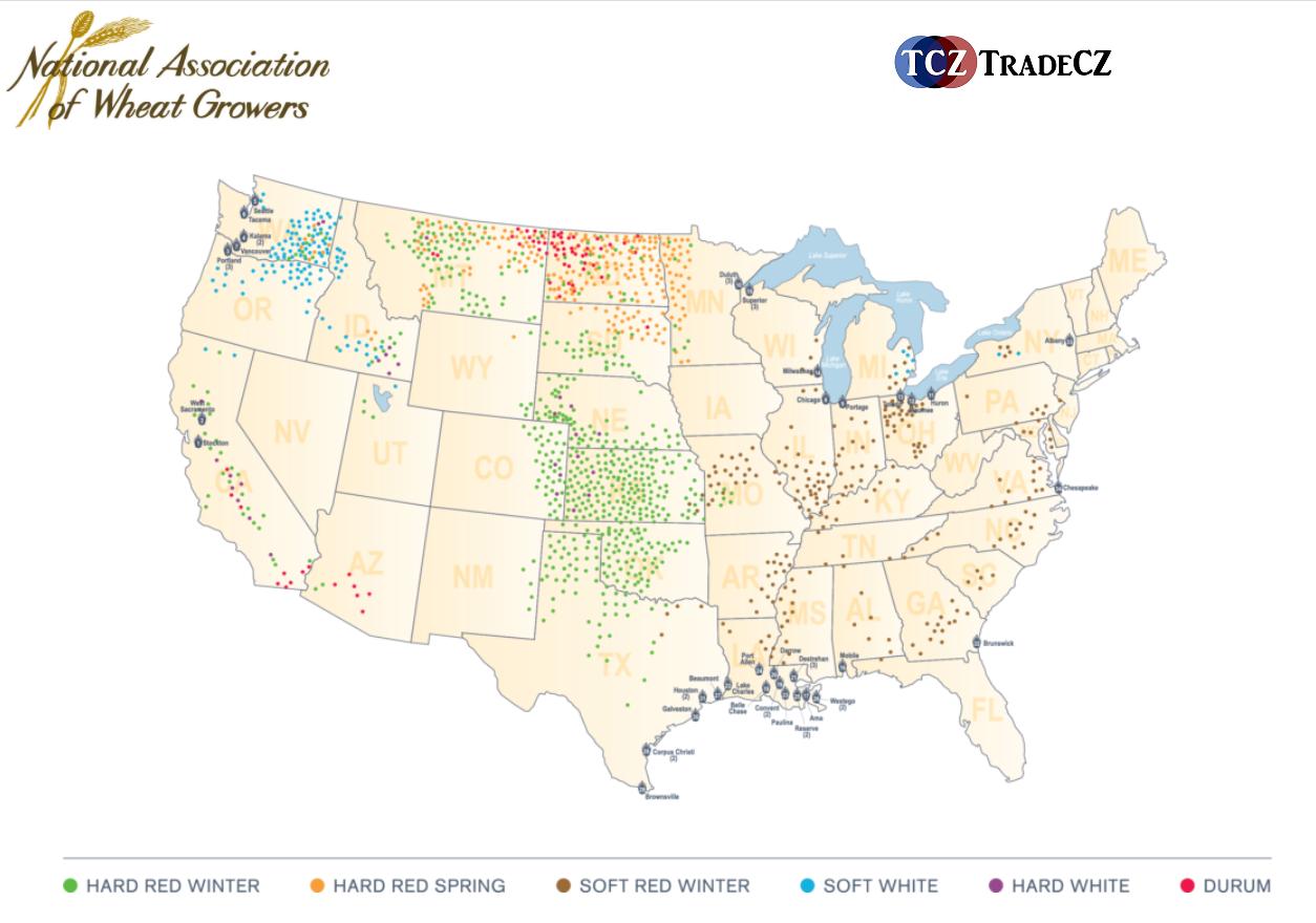 Produkce pšenice v USA